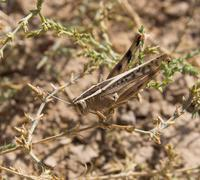 grasshopper in the grass. macro - stock photo