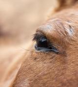 Eye horse Stock Photos