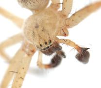 spider on a white background. macro - stock photo