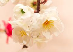 white artificial flowers - stock photo