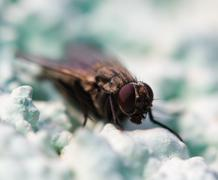 fly. macro - stock photo