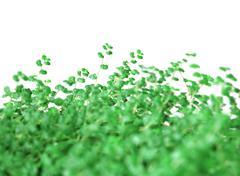 Background from green vegetation - soleirolia gaud, helxine Stock Photos