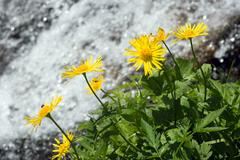 flower and stream - stock photo