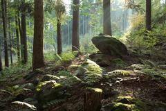 Big stone in old forest - stock photo