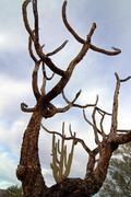 Cactus Branches Scenic Stock Photos