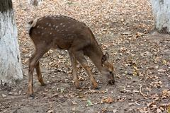 Deer in the zoo Stock Photos