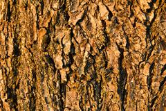 Tree bark in beams of the evening sun Stock Photos