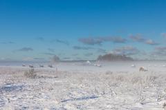 snowy hay bales in fog - stock photo