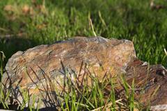 stone in the grass on the nature - stock photo