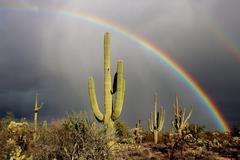 Magnificent Arizona Desert Rainbow Stock Photos