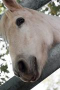 Stock Photo of horse