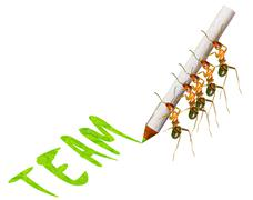 Ant write Stock Illustration