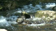 Stock Video Footage of Scenic flowing brook (2 of 2)