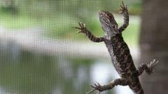 Lizard on the patio screen - stock footage
