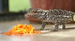 Stock Video Footage of Lizard n Carrots