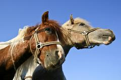 Horse love - stock photo
