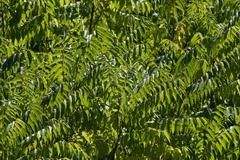 Lush greenery Stock Photos