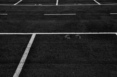 dividing lines in empty parking lot - stock photo