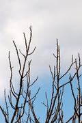 Leafless branches silhouette Stock Photos