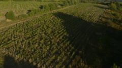 flying view of vineyard - stock footage