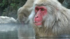 Snow monkeys in Japan, relaxed animals taking bath, funny Stock Footage