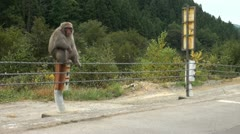 Monkey at entrance of national park in Japan Stock Footage