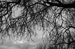 Stock Photo of tree branches silhouette under moody sky