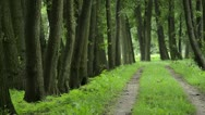 Stock Video Footage of Common alders (Alnus glutinosa) at a hiking trail, Spreewald Biosphere Reserve,