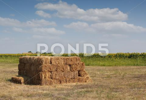 Stock photo of straw bale on field.JPG