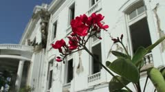 Pink flower waves in breeze at Haiti presidential palace after earthquake Stock Footage