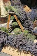 lavender for sale - stock photo