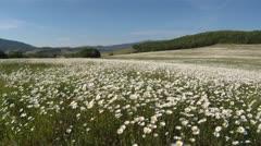 Beautiful Alpine pastures Stock Footage