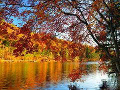 glorious fall colors - stock photo