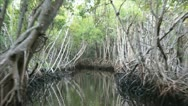 Stock Video Footage of Florida Everglades Airboat Ride