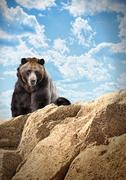 Wild bear mammal on cliff with clouds Stock Photos