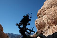 Canyon tree silhouette Stock Photos