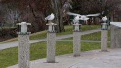 Seagulls in Park Stock Footage