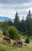Horses on mountainside. Stock Photos