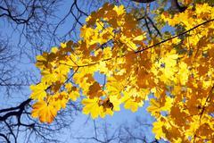 Autumn gold Stock Photos