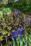 luxuriant nymphaea pond - stock photo