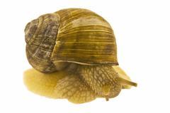snail. - stock photo
