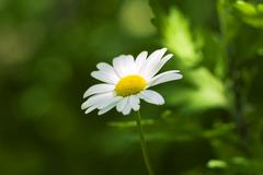 Flower on field green background Stock Photos