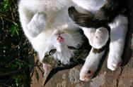 Stock Photo of white cat