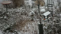 Birds Using Feeder in the Snow Stock Video Stock Footage