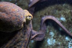 Octopus beak Stock Photos