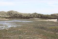 landscape waterhole - stock photo