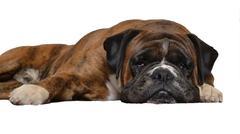 Sad dog on white background Stock Photos