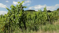Vineyards, Upper Middle Rhine Valley, Germany Stock Footage