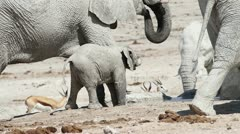 Elephant baby herd Stock Footage
