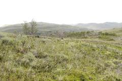 Stock Photo of w trek on torres del paine park